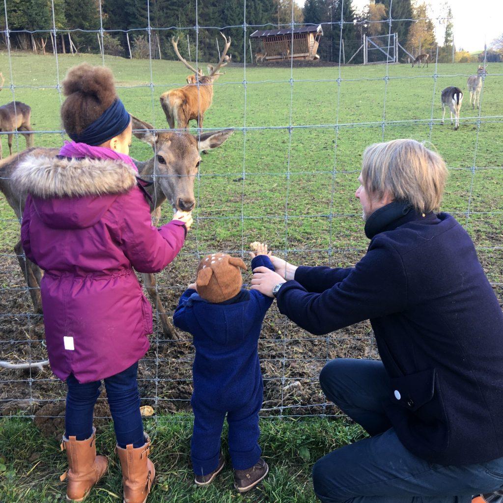 Hirsche fuettern Naturhotel Forsthofgut