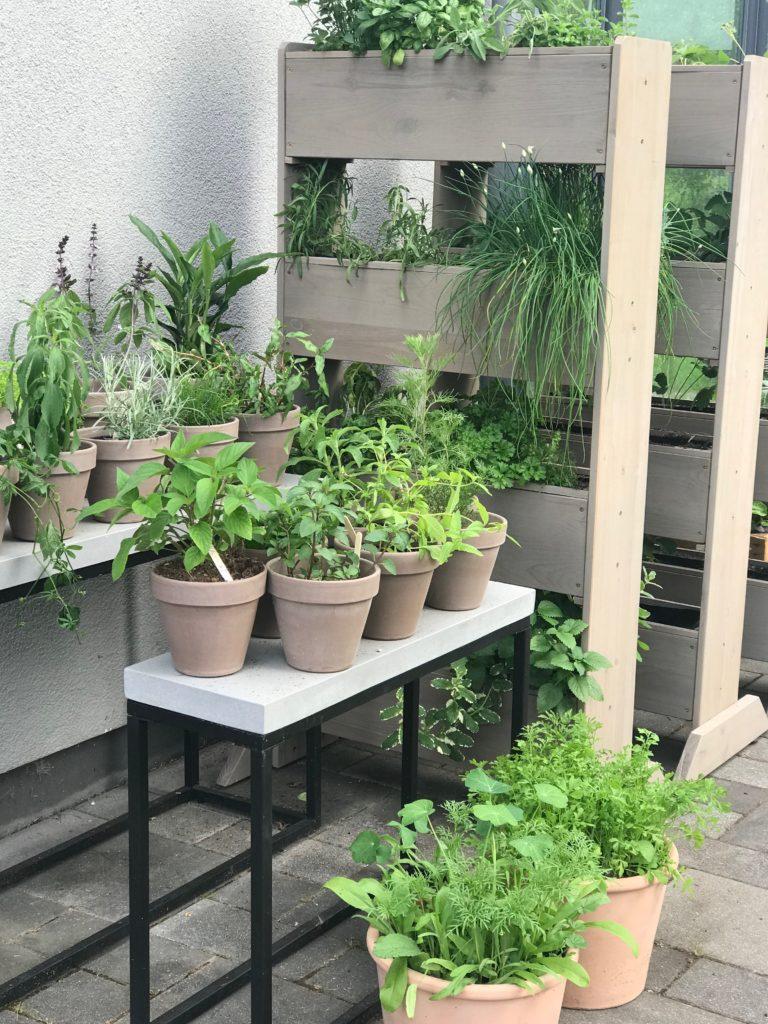 Vertikale Beete Mit Erdbeeren Und Krautern Bepflanzen