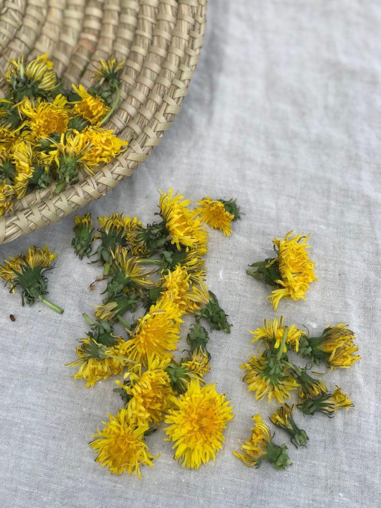 Der beginnende Sommer zeigt sich von seiner schönsten Seite, es blüht und grünt und duftet um uns herum! Die Löwenzahnblüten erfreuen uns mit ihrer kräftig gelben Farbe und sie eignen sich auch als ganz wunderbar zur Herstellung eines Löwenzahnhonig