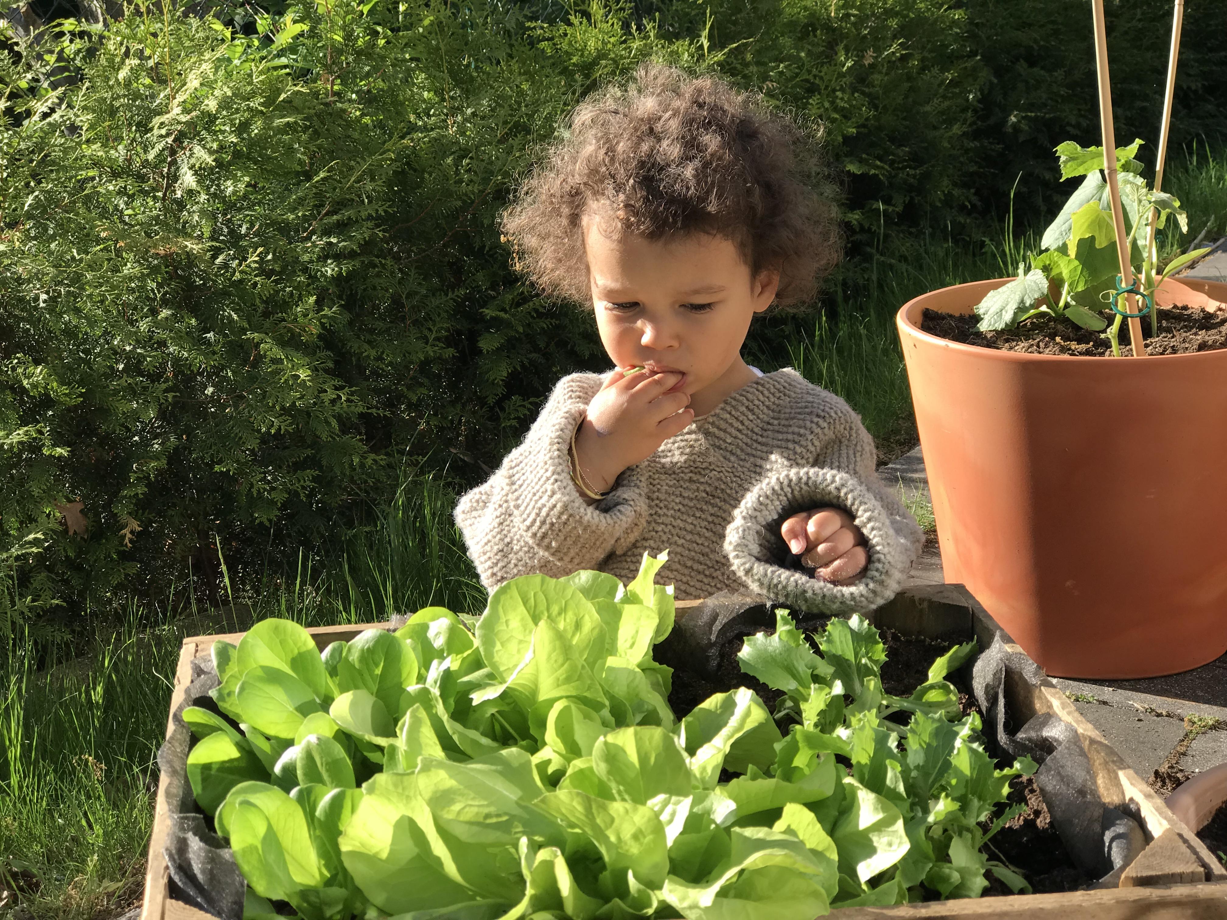 Naschbeete für Kinder sind eine schöne Art und Weise den Kindern das Wachsen der Pflanzen lebensnah zu zeigen und ihnen einen achtsamen Umgang mit Lebensmitteln beizubringen, wie ihr sie anlegt zeige ich euch.Noch mehr schöne Tipps findet ihr auf www.elfenkindberlin.de