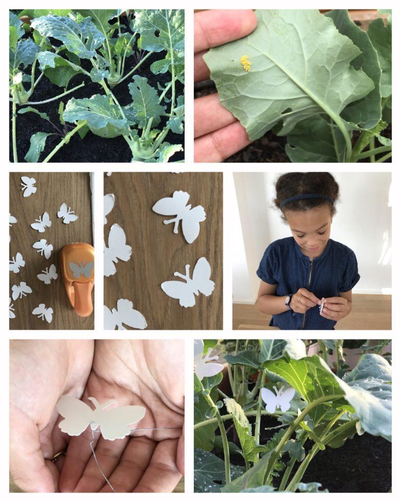 Kohlweißling biologisch bekämpfen! Den Kohlweißling im Garten und auf den Kohlpflanzen! Symptome erkennen, vorbeugen und bekämpfen.Inklusive passenden DI¥