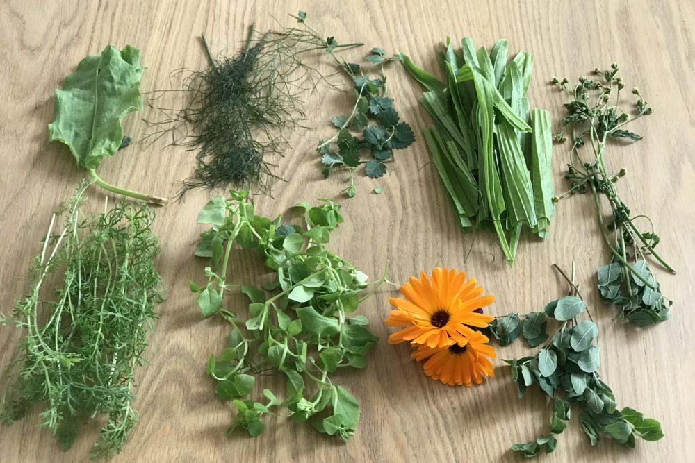 Wildkräuter Öl Rezept und schöne Tipps für eine Kräuterwanderung mit Kindern . Noch mehr Kräuterrezepte findet ihr auf www.elfenkindberlin