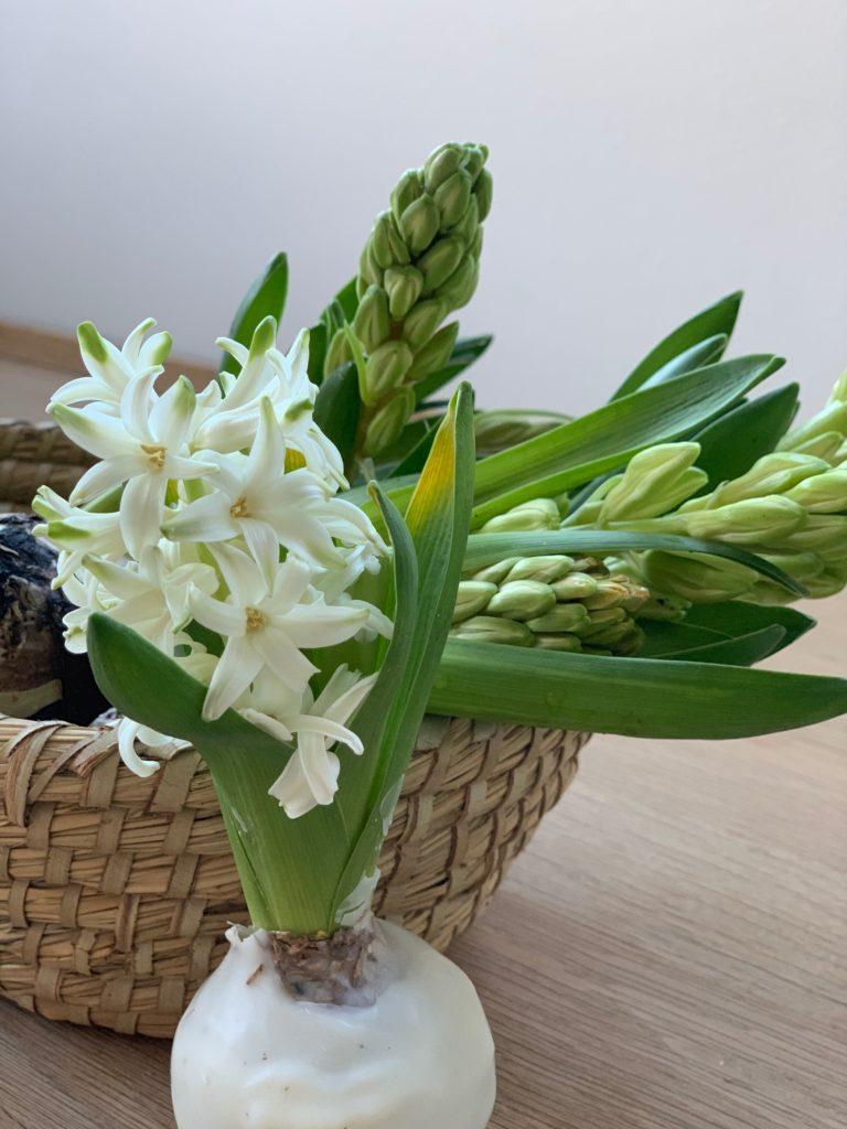 Eine Frühlingsahafte DIY Idee : Wachsblumenzwiebeln oder auch Hyazinthen in Wachs! Einfach und schön, die Anleitung findest du auf www.elfenkindberlin.de