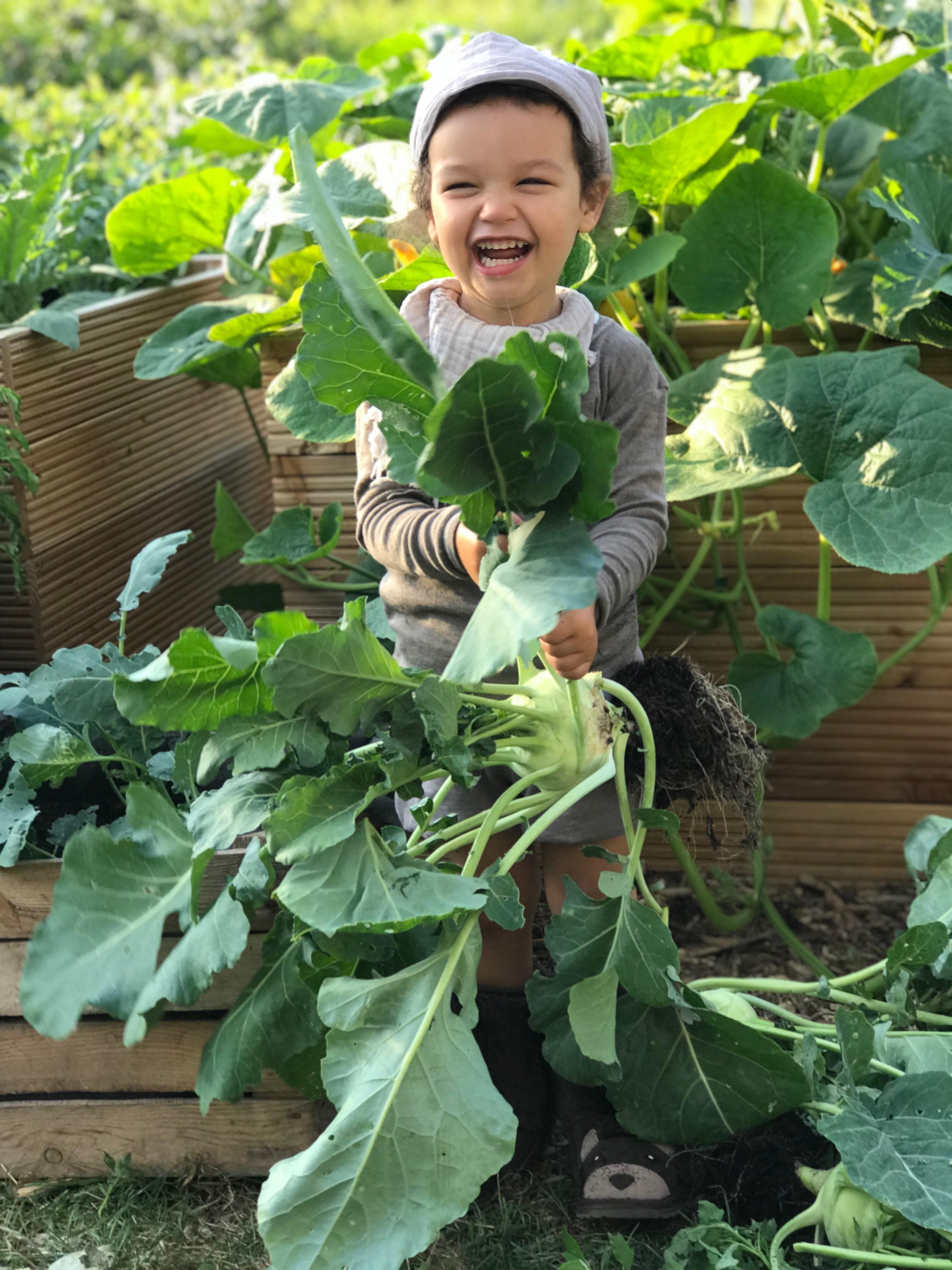 Hochbeete anlegen! Selbstversorgung für Anfänger ! Mit Hochbeeten, durch das Jahr mit frischen Gemüse,Kräutern und Obst.Mehr dazu auf www.elfenkindberlin.de