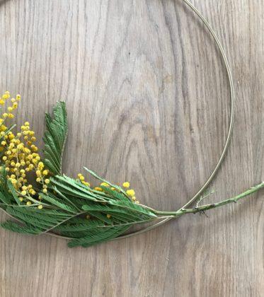 Mimose im Ganzen betrachtet | Aromatherpeutisch als Parfum und als schöner Kranz im Haus