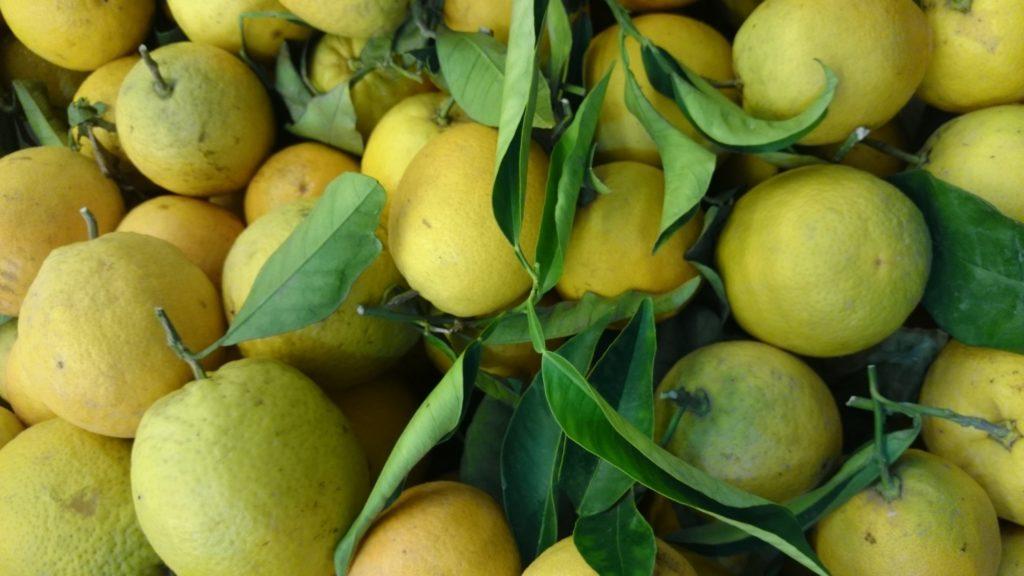 Warum warmes Zitronenwasser sooo gut für uns ist und für mich mitlerweile ein so liebgewonnes Ritual ist